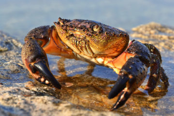 Harvesting Stone Crabs and Email Addresses: Ingenious vs. Infiltration